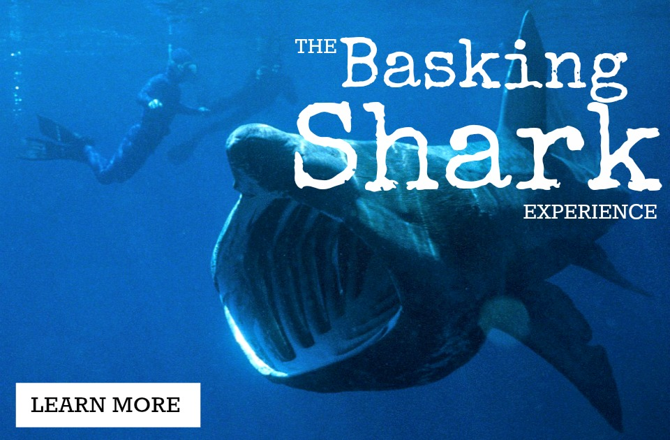 basking-shark-experience