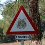 iberian-lynx-Sierra-de-Andújar-ibex-cordoba-seville