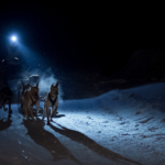 Husky sledding in the night lit up by head torch