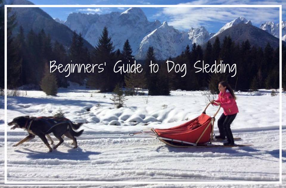 Beginners' Guide to Dog Sledding