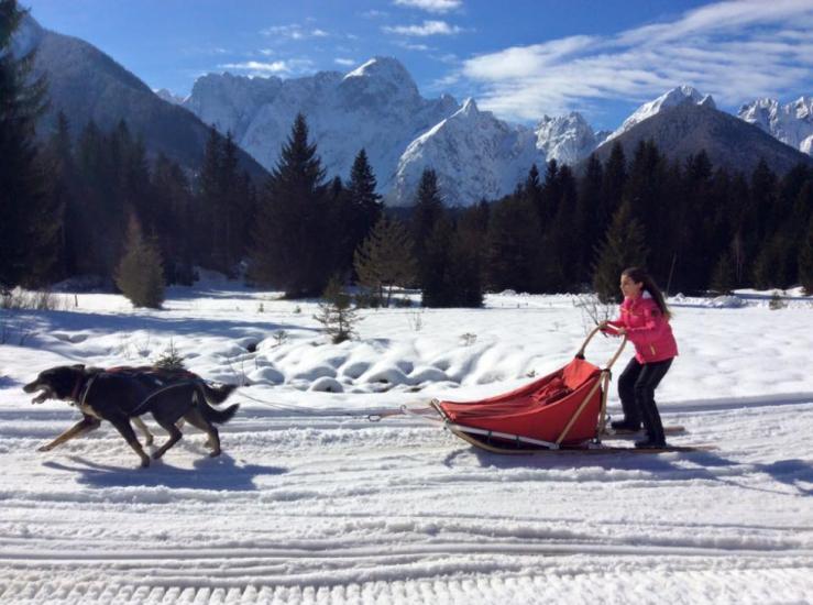 Husky skiing in Slovenia
