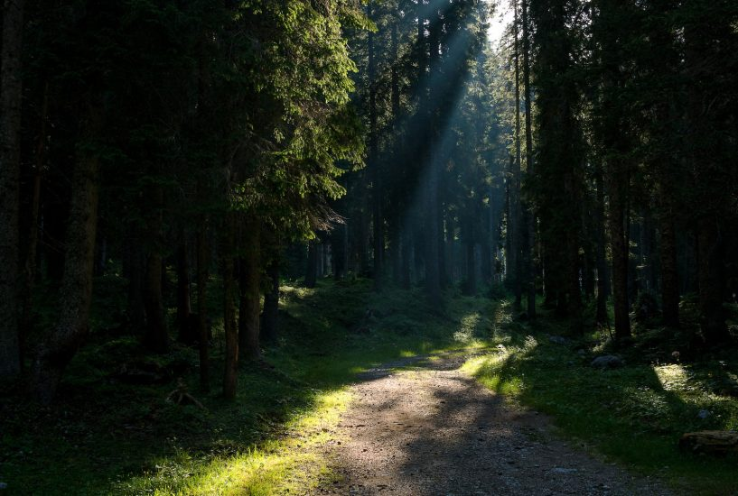Sun shining through a forest in Slovenia