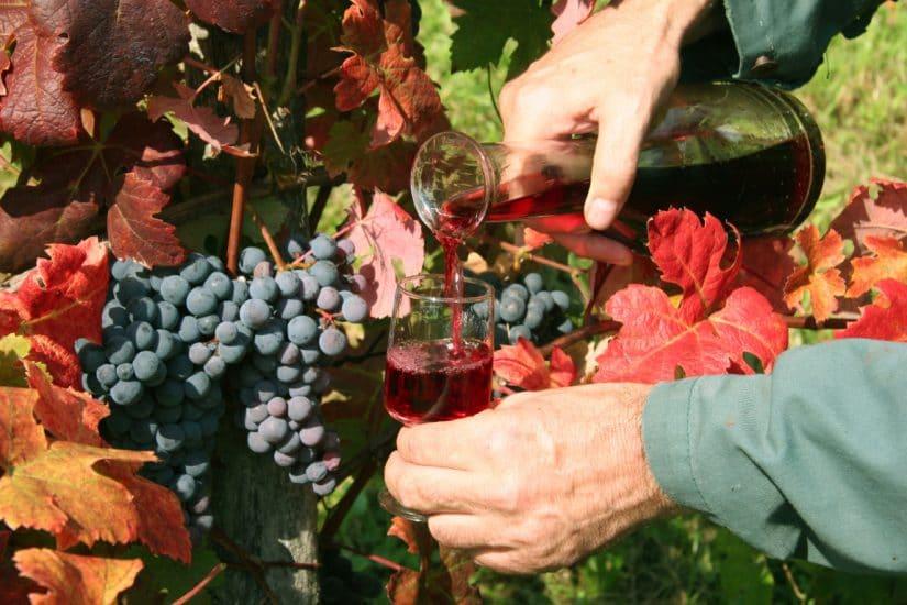 Slovenia winemaker in vineyard