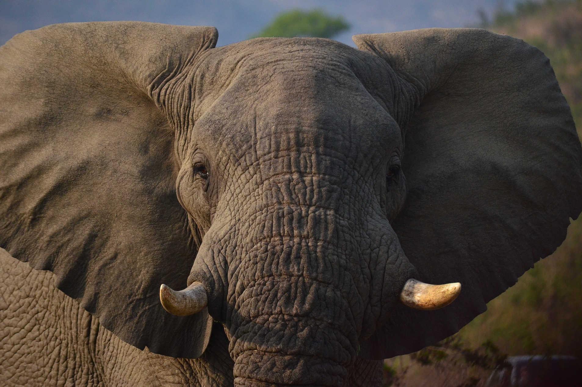 Magical Elephant Encounter